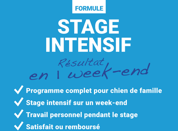 educateur-canin-amiens-somme-stage-intensif-chien