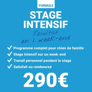 educateur-canin-comportementaliste-amiens-somme-picardie-stage-intensif