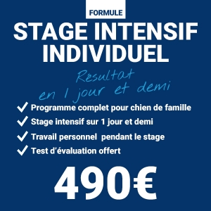 educateur-canin-comportementaliste-stage individuel-tarif